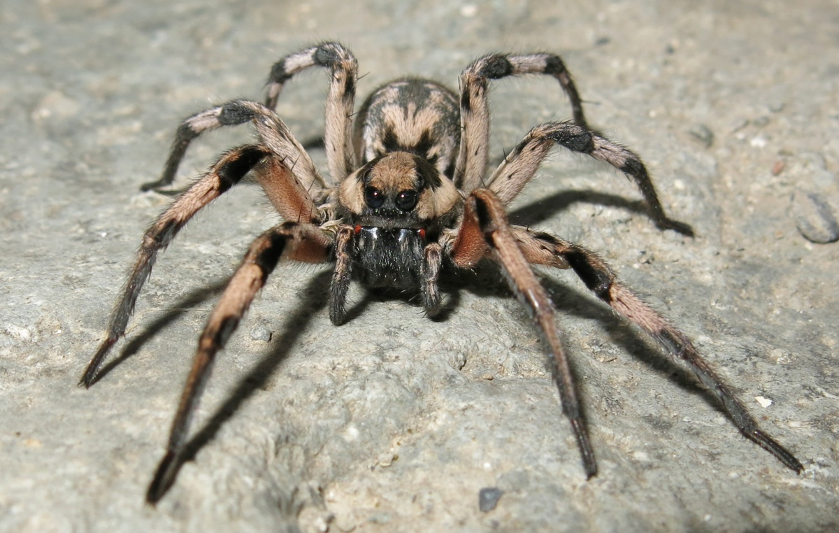Huge Spiders Appeared in Hungary – Do Not Hurt Them! – The ...